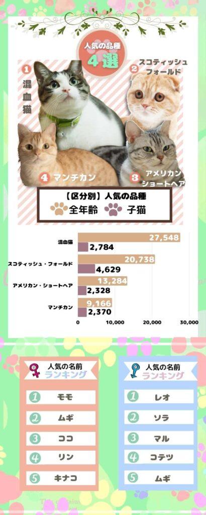 【猫】人気の品種&人気の名前
